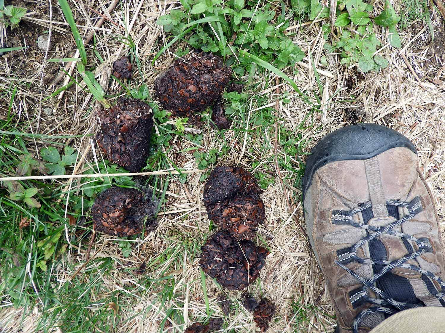 Bears - The forests around St Ann Lake are known for the abundance of wildlife. Bears frequent the area around the lake and signs warn hikers to be on the lookout. We came across pile of fresh bear scat on a few meters from the lake.