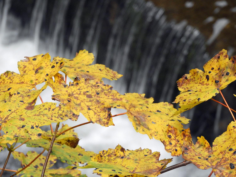 romania-bicaz-waterfall-autumn-yellow-leaves-colors.jpg