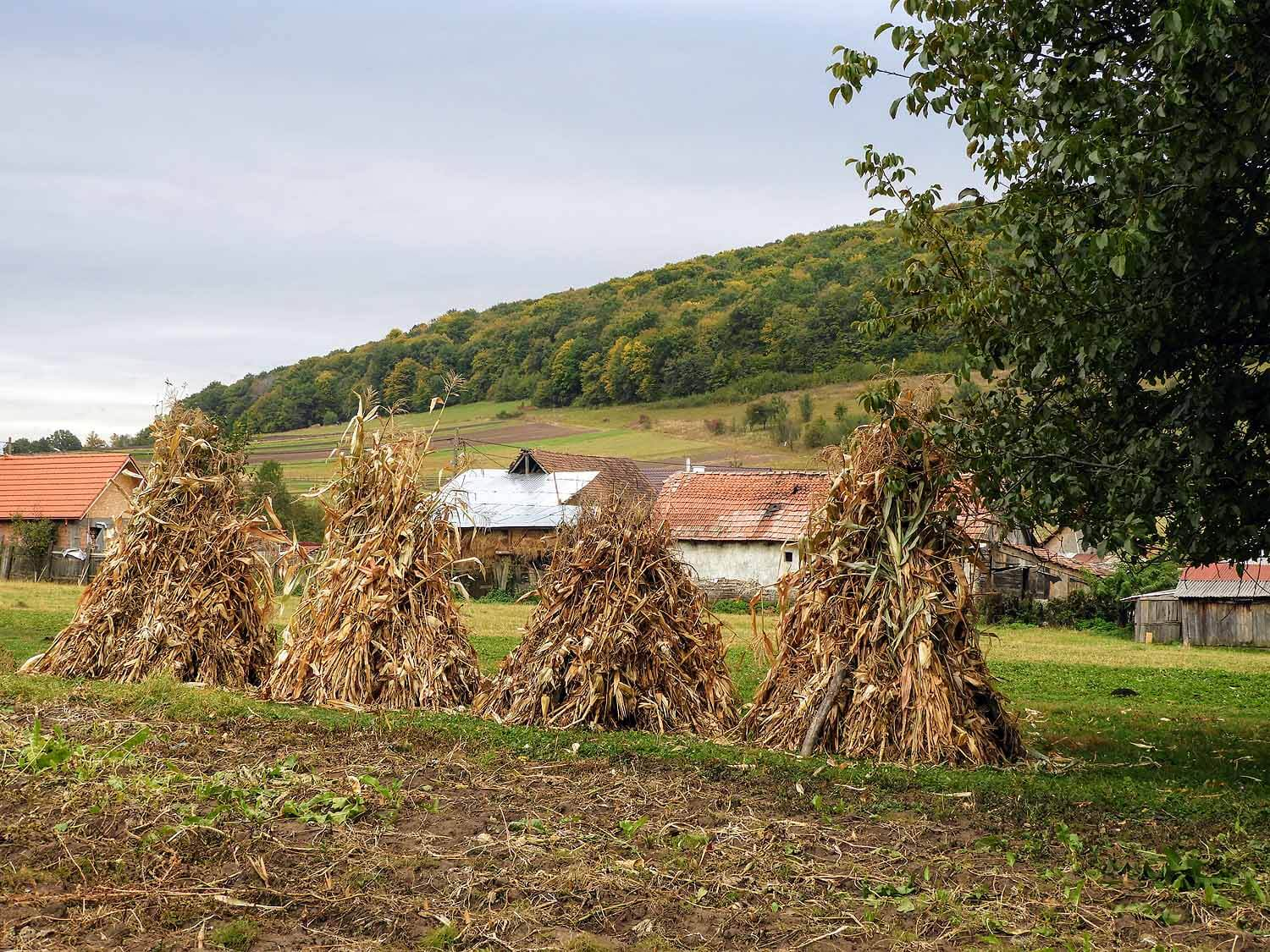 romania-valcele-farm-fields-fall-harvest.jpg