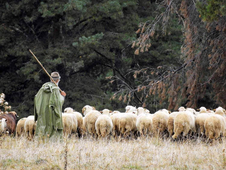 romania-valcele-pastor-sheep-herder.jpg