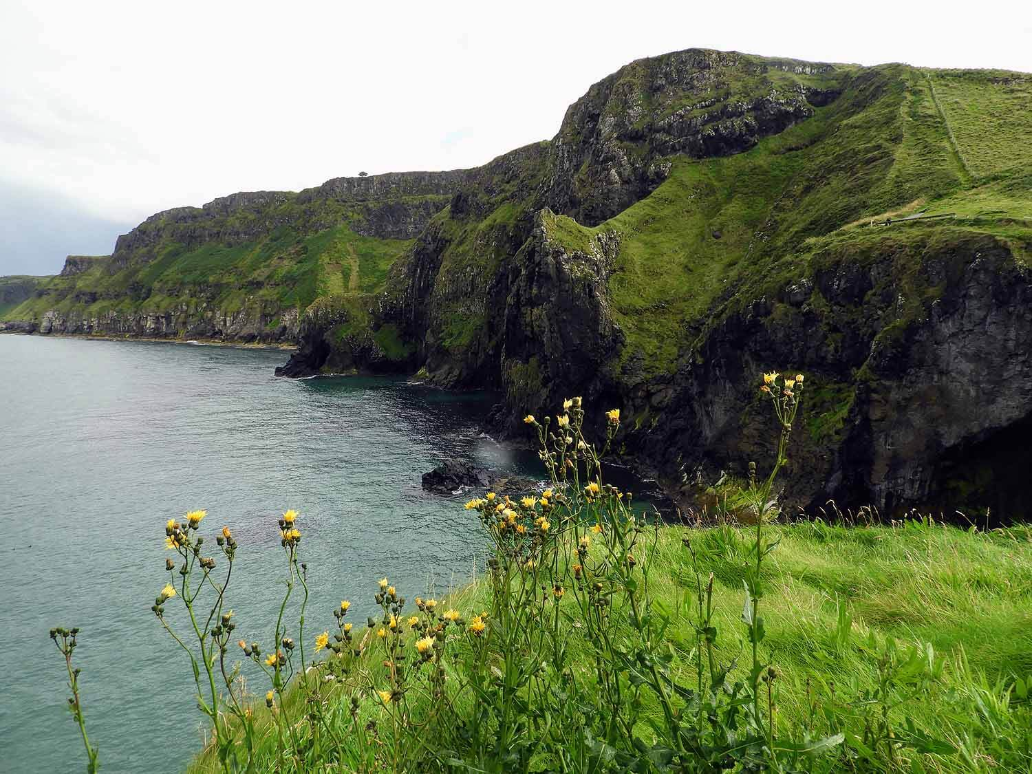 northern-ireland-coast-flowers-sea-ocean-cliffs.jpg