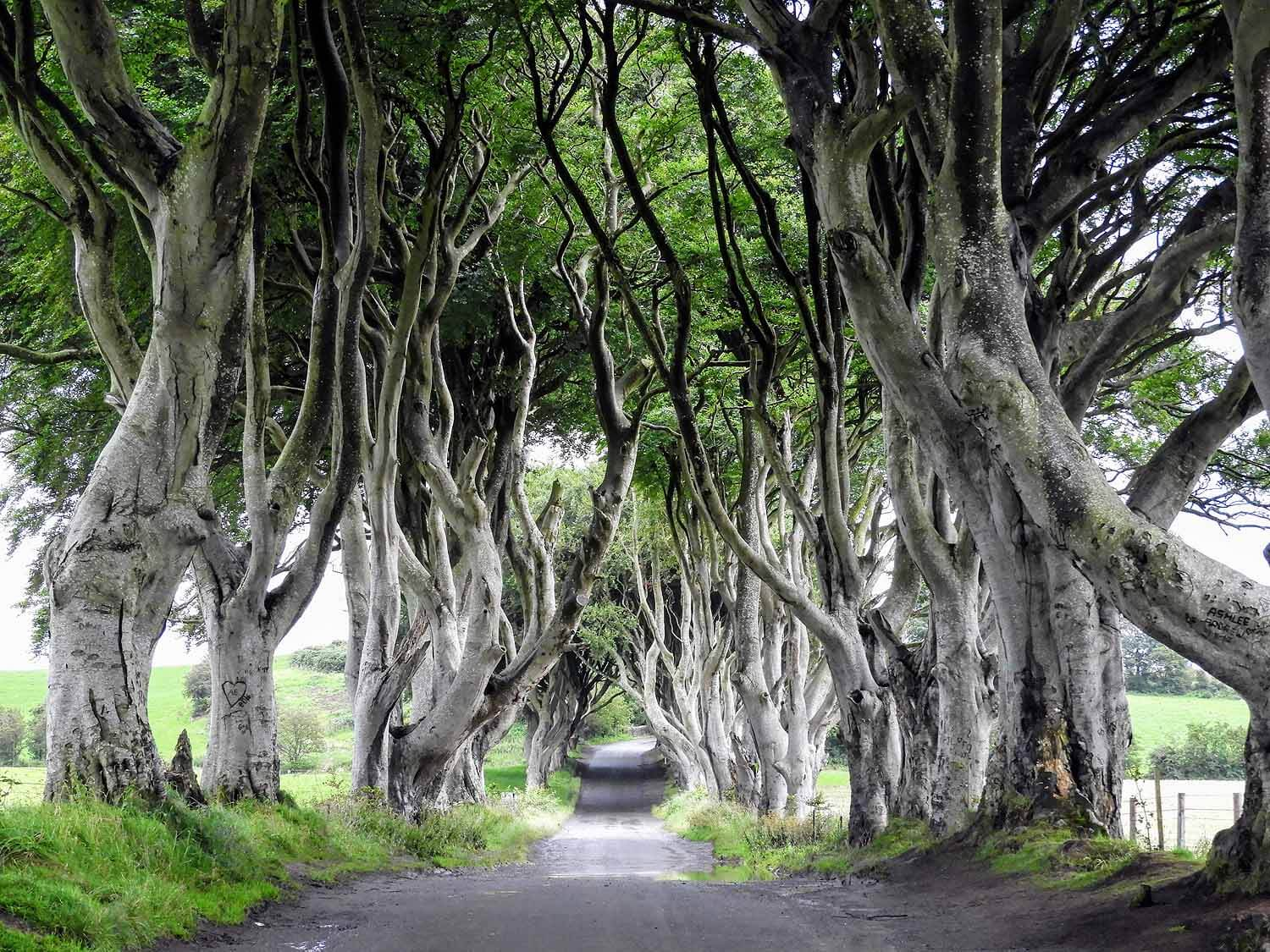northern-ireland-coast-dark-hedges-game-thrones-bregagh-tree-tunnel.jpg