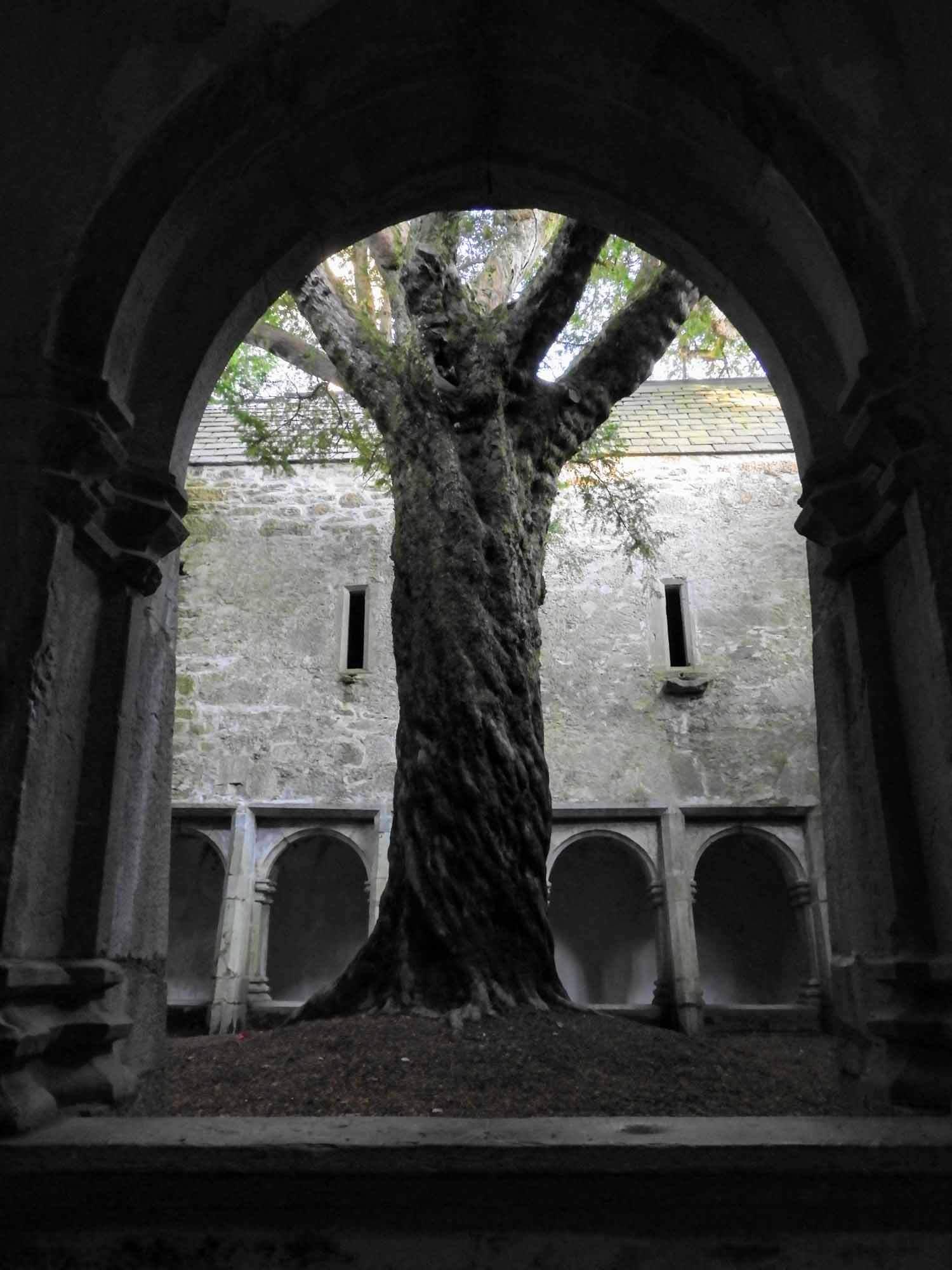 ireland-killarney-muckross-abby-ruins-tree-courtyard.jpg