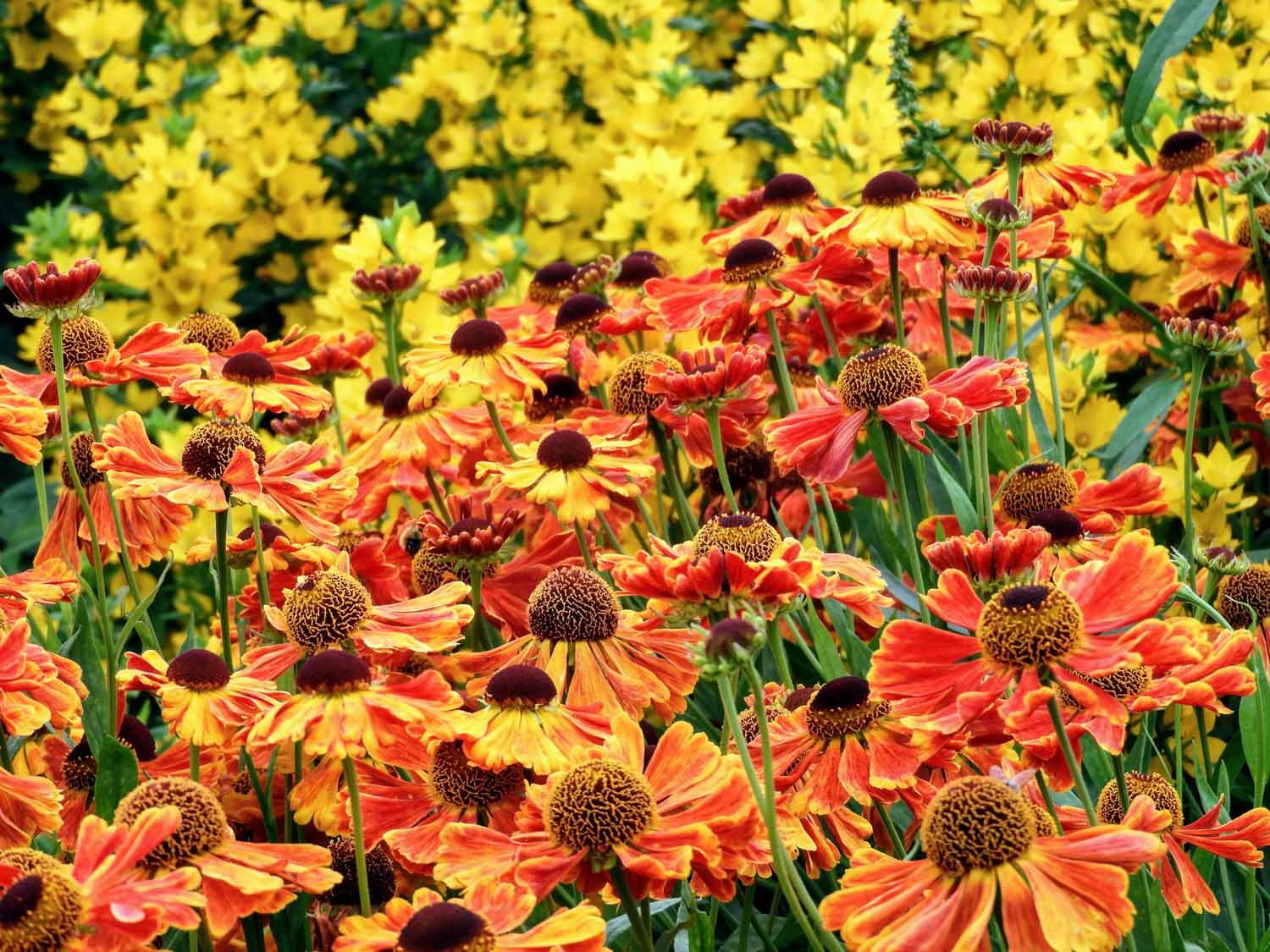 ireland-dublin- flowers-yellow-red.jpg