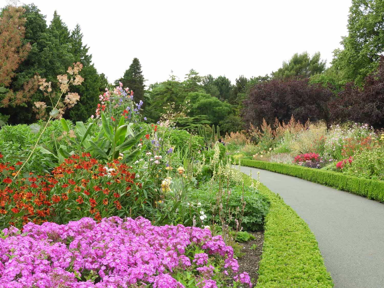 ireland-dublin-botanical-gardens-flowers.JPG