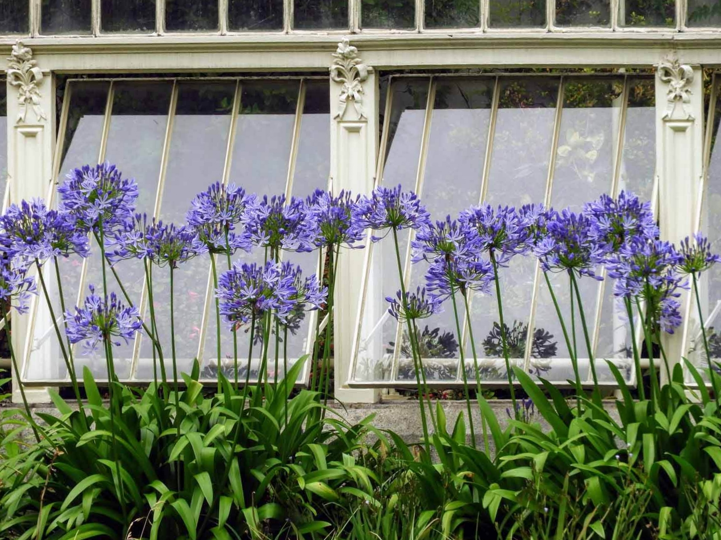 ireland-dublin-flower-botanical-gardens-window-greenhouse.jpg