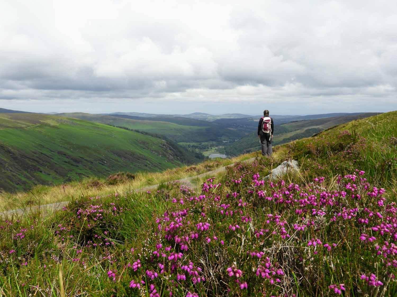 ireland-glendalough-monastic-hike-flowers-veiw-loop.jpg