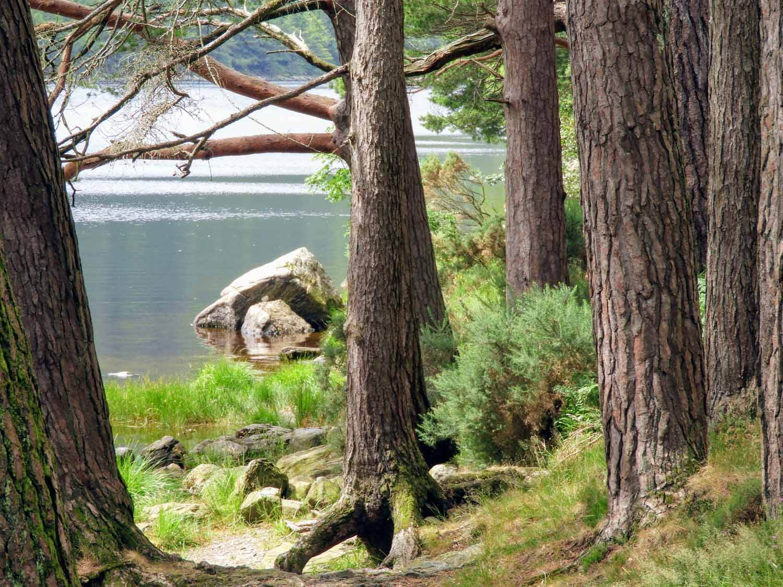 ireland-glendalough-monastic-lake-shore.jpg