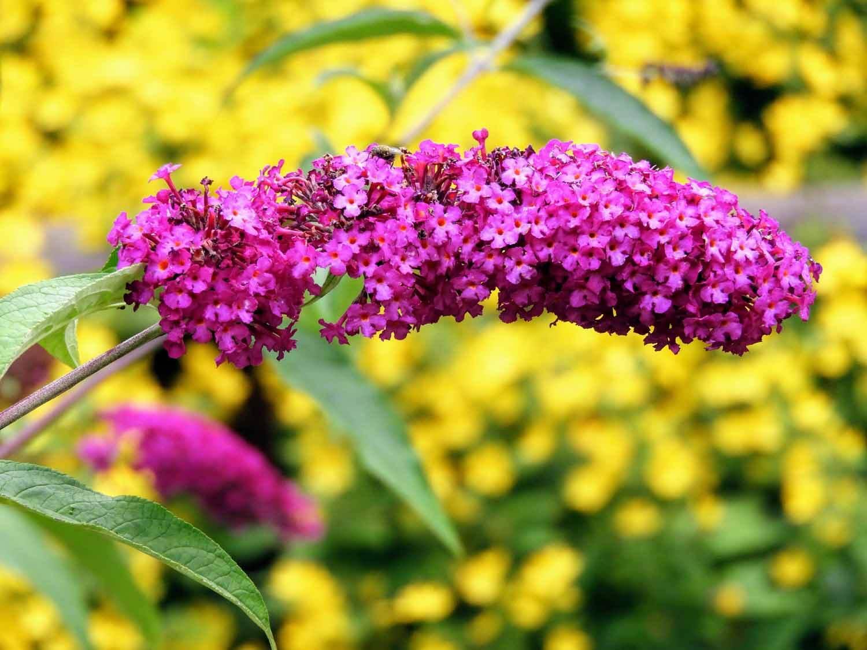 ireland-glendalough-monastic-flowers-purple-yellow.jpg
