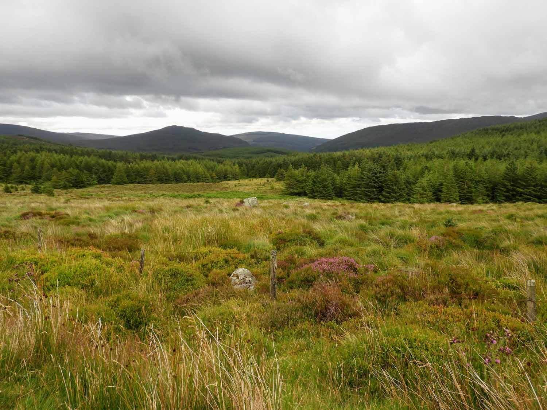 ireland-glendalough-monastic-countryside-reforestation.jpg