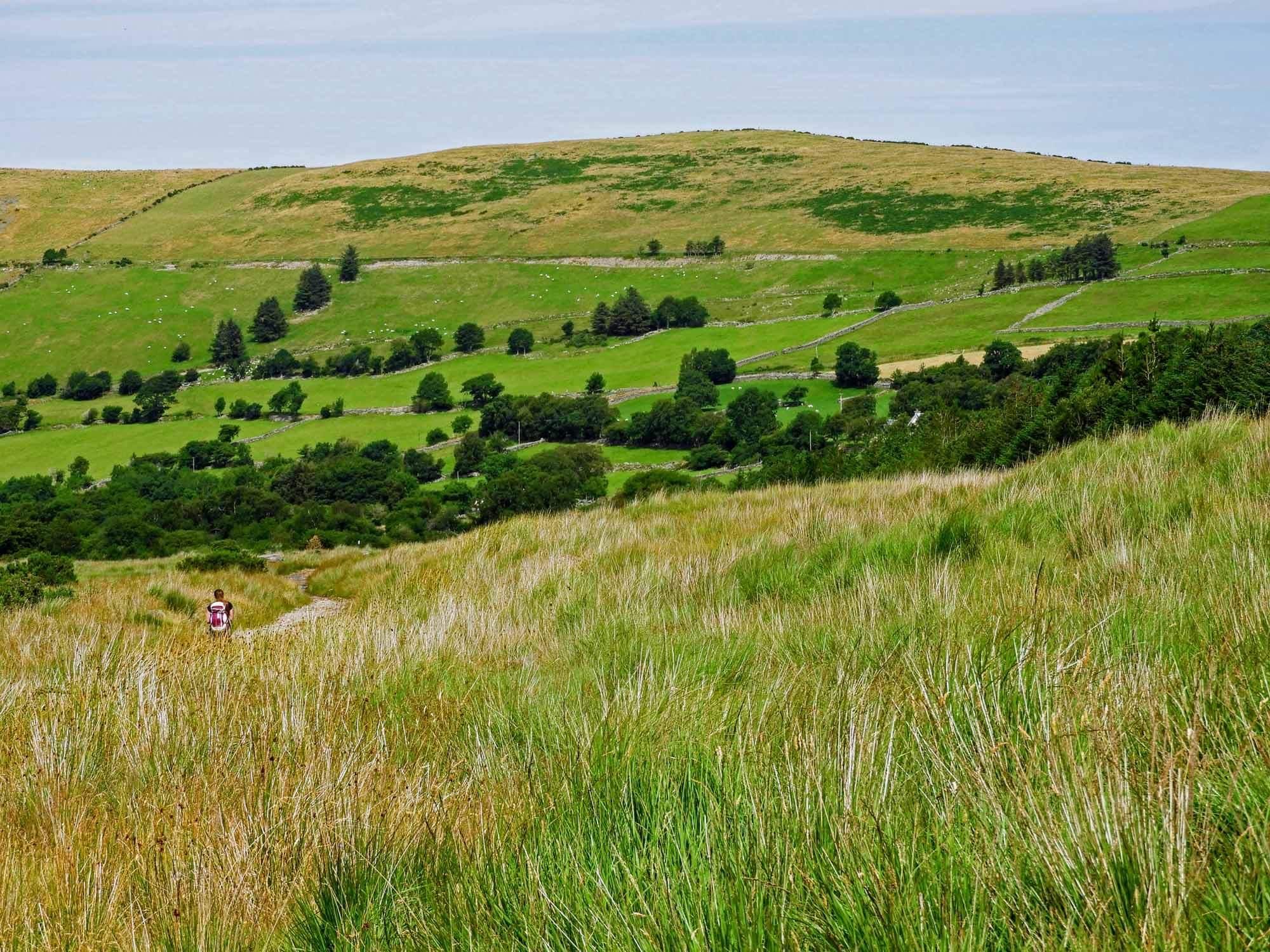 ireland-carrauntoohil-highest-mountain-peak-green-fields-grass-sheep.jpg
