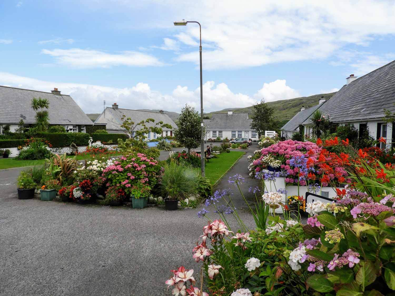 ireland-donegal-glencolumbkille-gleann-cholm-cille-village-hydrangea-flowers.jpg