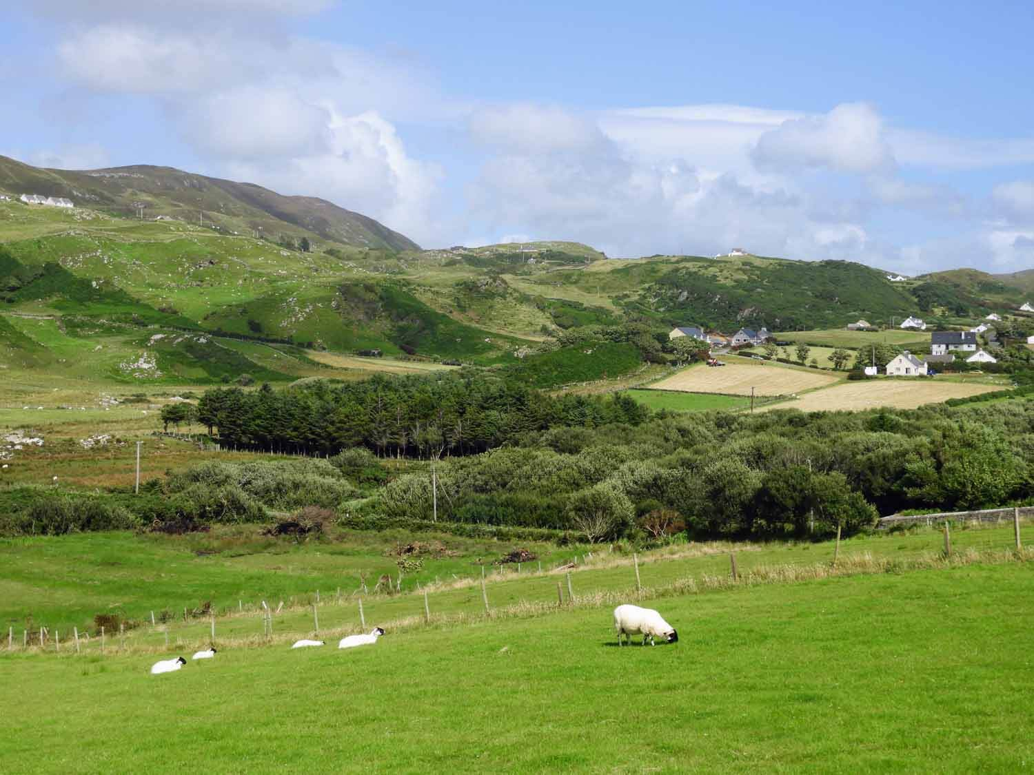 ireland-donegal-glencolumbkille-gleann-cholm-cille-sheep-green-hills.jpg