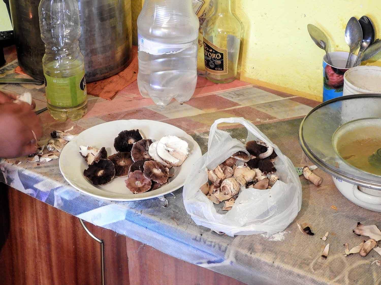 romania-hetea-kastalo-forest-gypsies-mushrooms.jpg