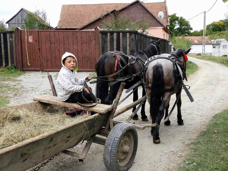 romania-hetea-kastalo-forest-gypsies-horse-wagon.jpg