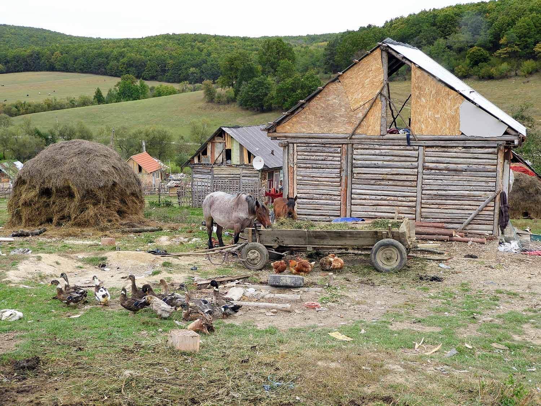 romania-hetea-kastalo-forest-gypsies-houses-poverty.jpg