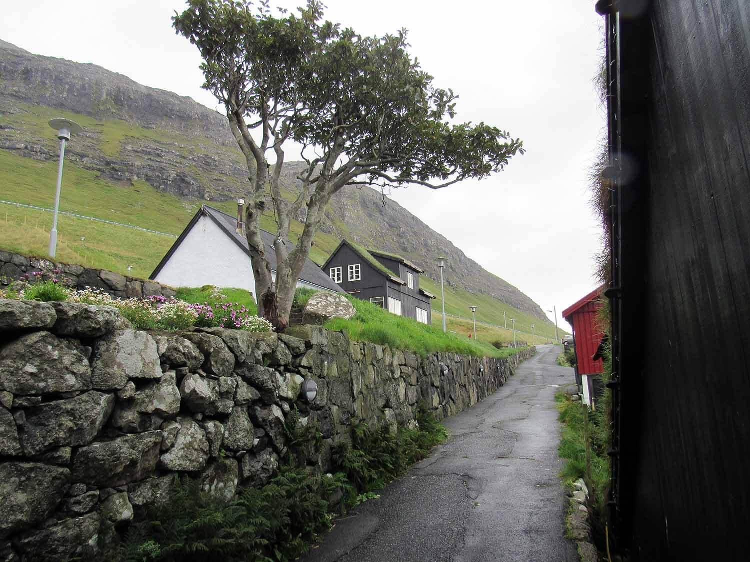 denmark-faroe-islands-vagar-boer-village-street-tree.JPG