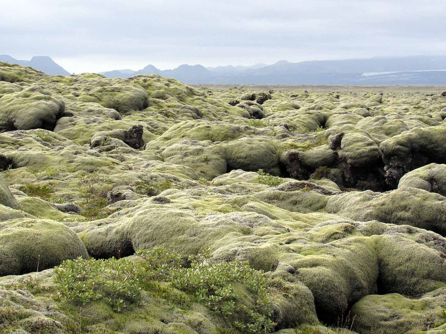 Eldhraun  - I never thought I could get so excited about moss. Eldhraun is the largest lava flow in the world. Created by the Skaftareldar (the Skafta River Fires) eruption in 1783-1784, this gigantic 565 square kilometer site is not to missed! I'll never forget the squishy feeling beneath my feet as we bounced from rock to rock like kids on a playground. This place is awesome!