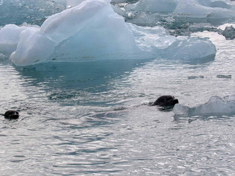 iceland-jokusarlon-glacier-ice-lagoon-black-sand-beach-seals.JPG