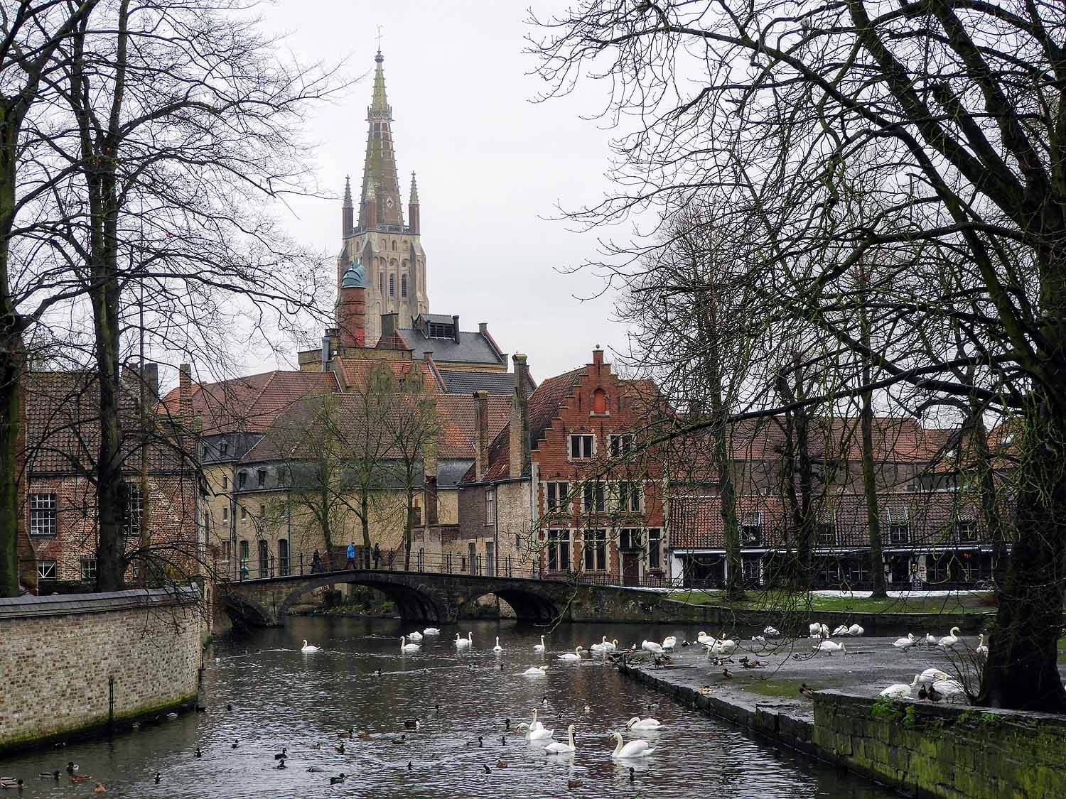 belgium-bruges-cathedral-bridge-swans.jpg