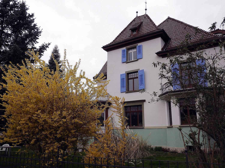 switzerland-interlaken-forsynthia-yellow.JPG