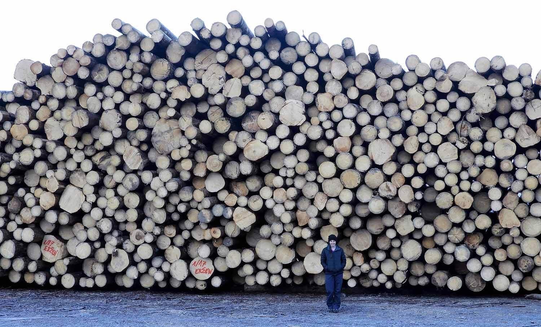 slovenia-triglav-national-park-log-logging-trees-forest.jpg