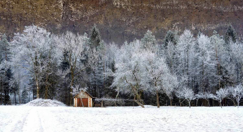 slovenia-triglav-national-park-icy-trees-barn.jpg