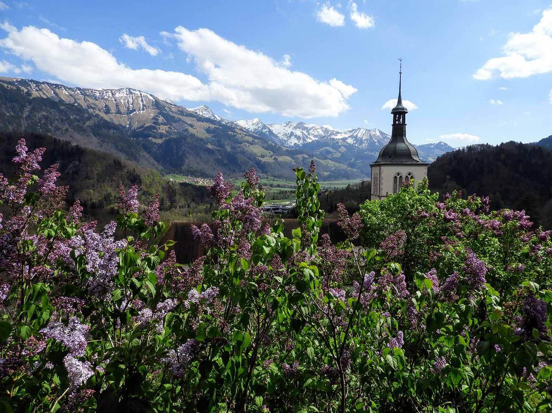 switzerland-grureyes-flowers-mountains-alps.jpg