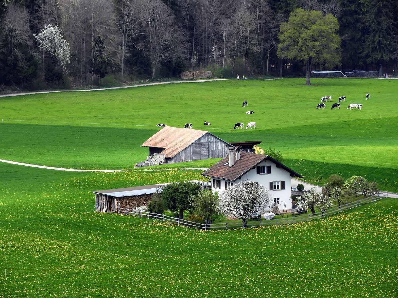 switzerland-grureyes-green-farm.jpg