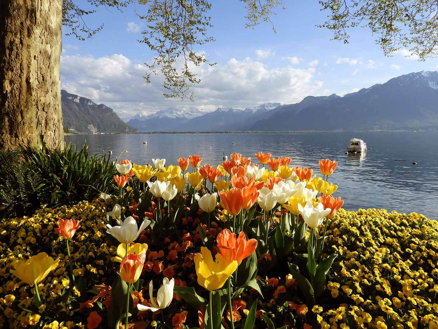 switzerland-montruex-tulips-lake-boat.jpg