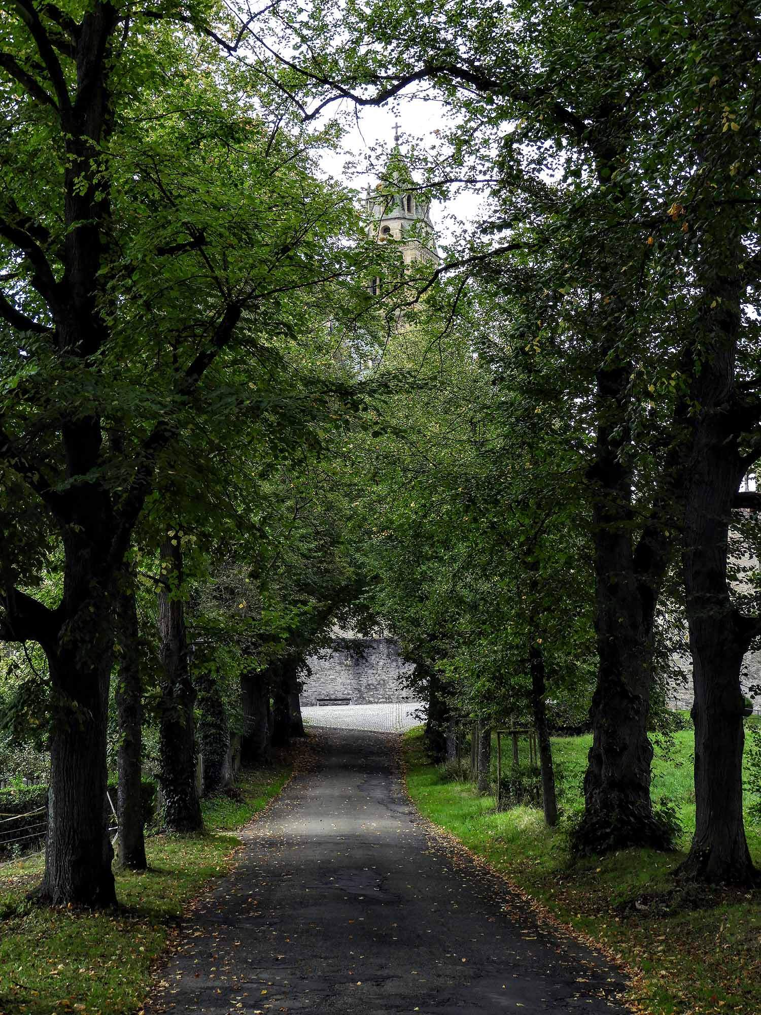 germany-kloster-grosscomburg-tree-lined-street.jpg