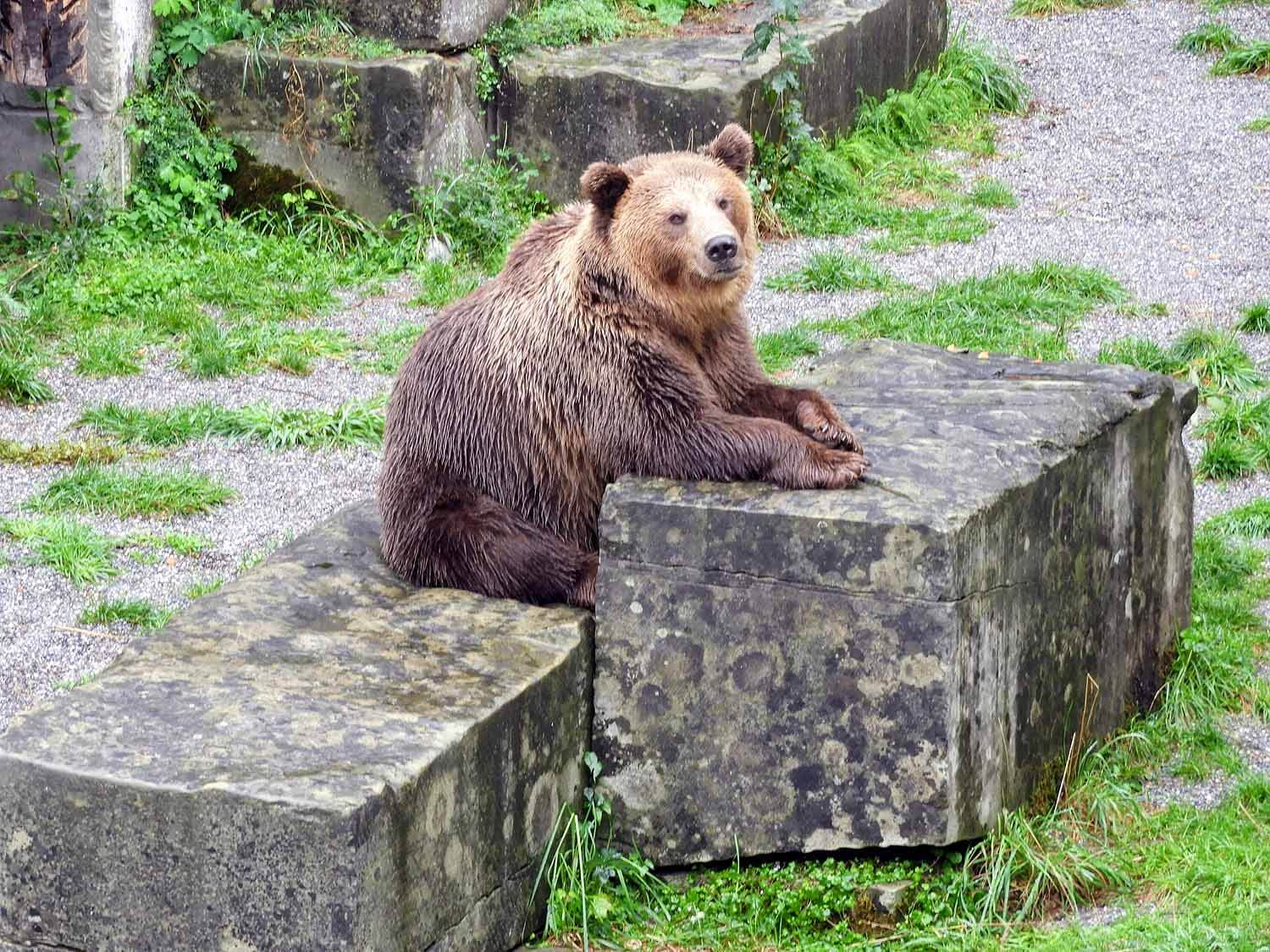 switzerland-bern-bear-pit.jpg