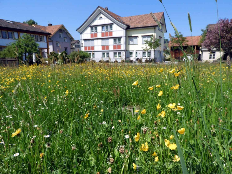 switzerland-appenzell-spring-flowers-grass.JPG