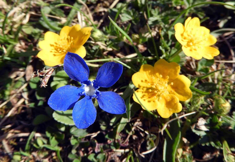 switzerland-ebenalp-seealpsee-spring-flower.JPG