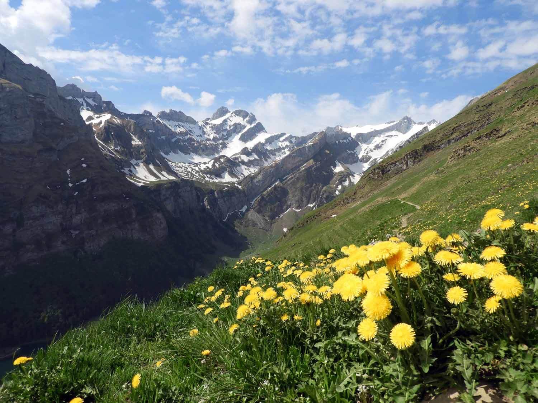 switzerland-ebenalp-seealpsee-spring-dandylions.JPG