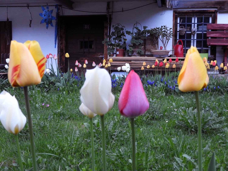 switzerland-oberalppass-vorderrhein-river-valley-tulip-house.JPG