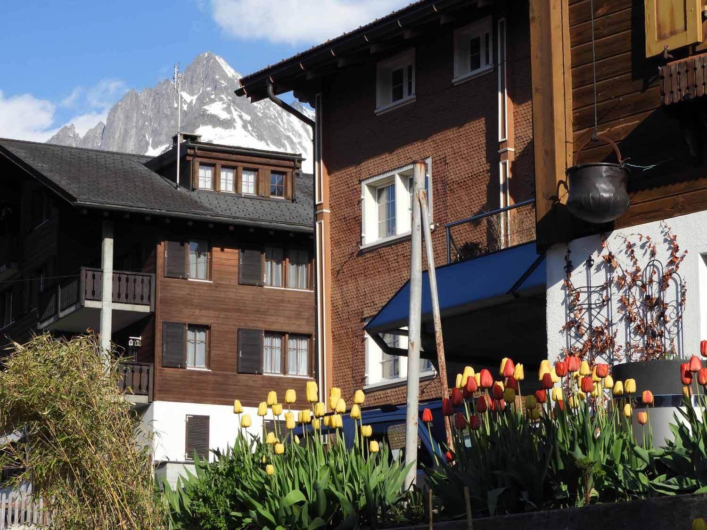 switzerland-oberalppass-vorderrhein-river-valley-tulips.JPG