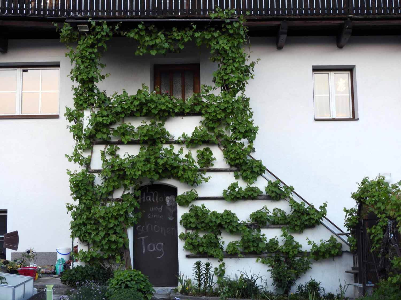 austria-imst-house-vines.JPG