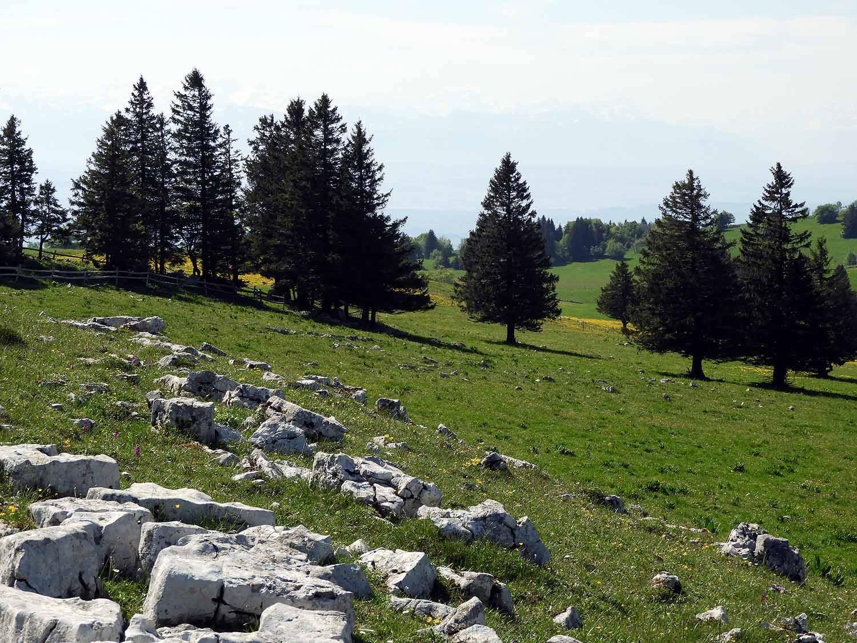 switzerland-cruex-du-van-rocky-limestone-forest.JPG