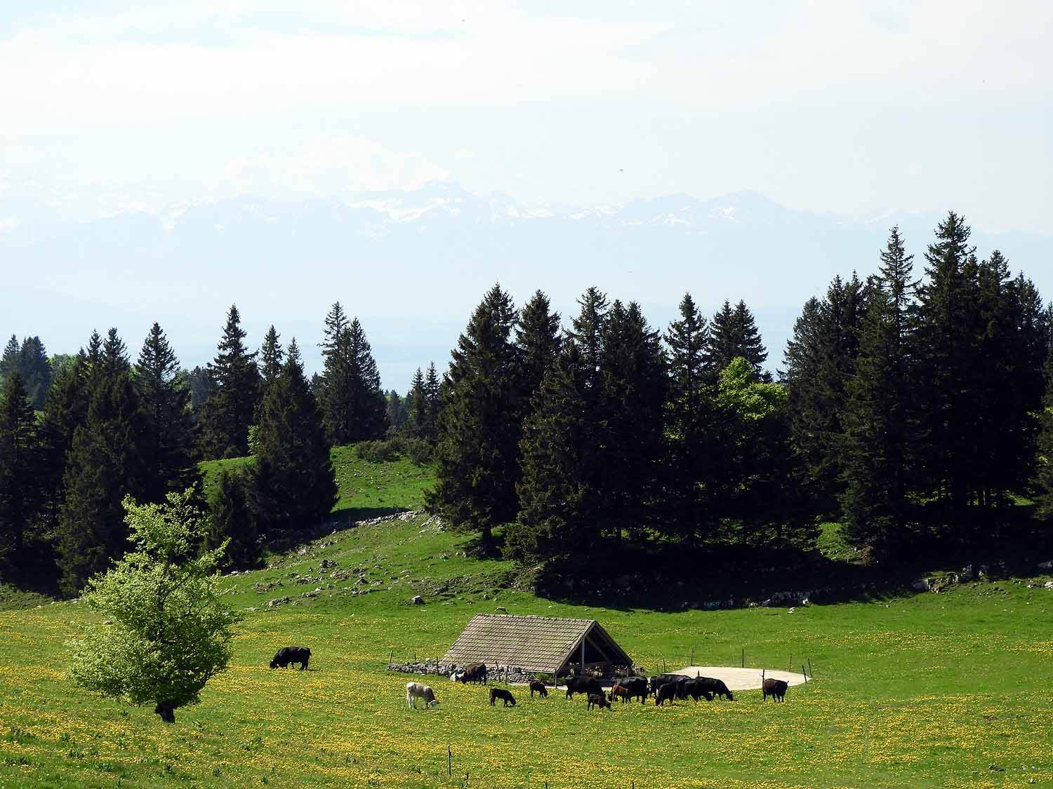 switzerland-cruex-du-van-farm.JPG