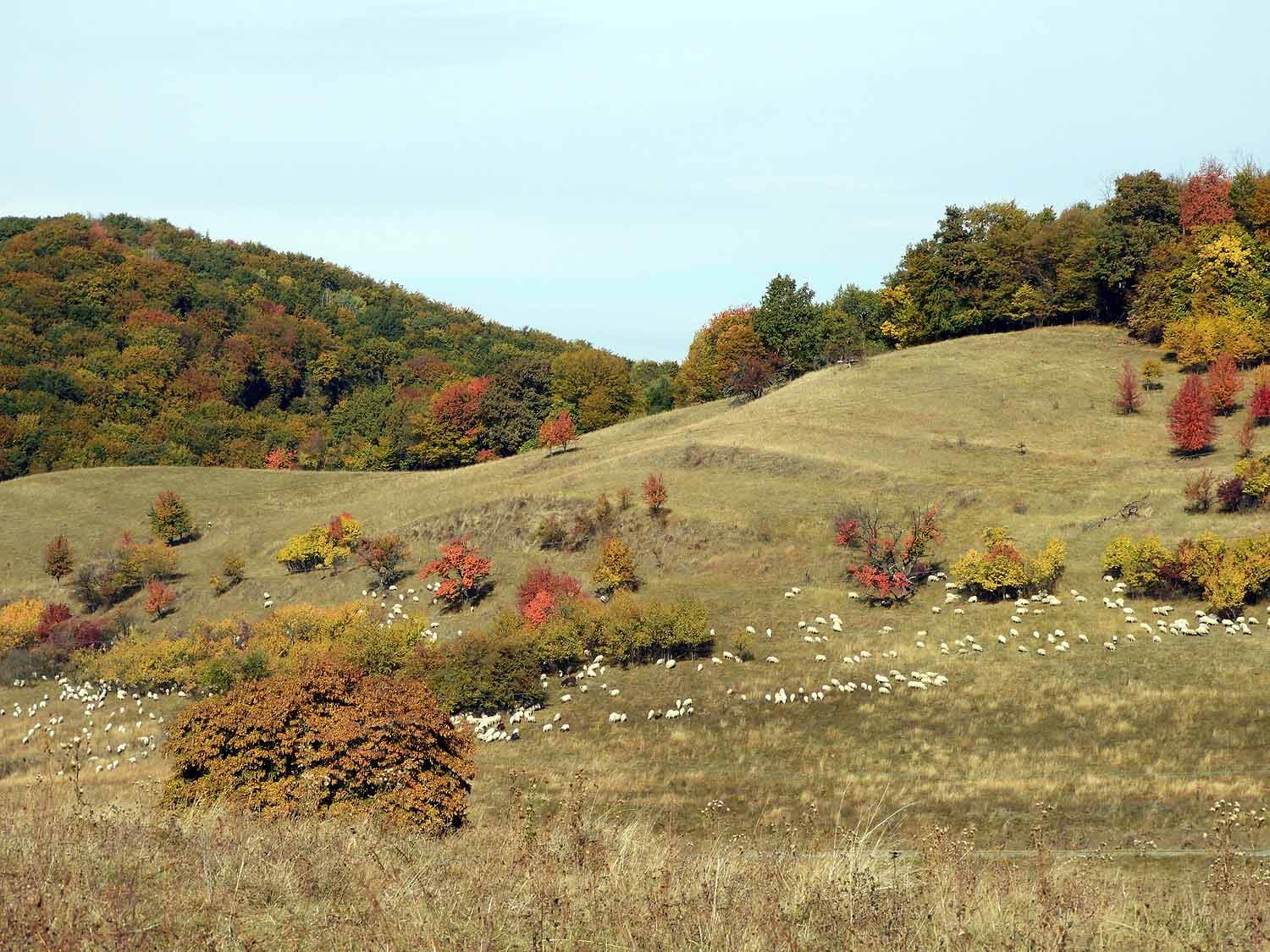 romania-mosna-countryside.JPG