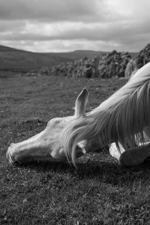 The+Burren+slow+diaries (2).jpg