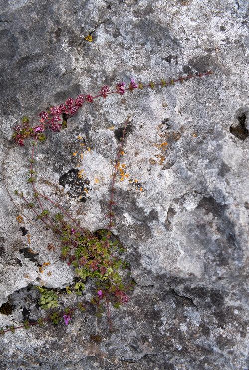 The+Burren+slow+diaries (4).jpg
