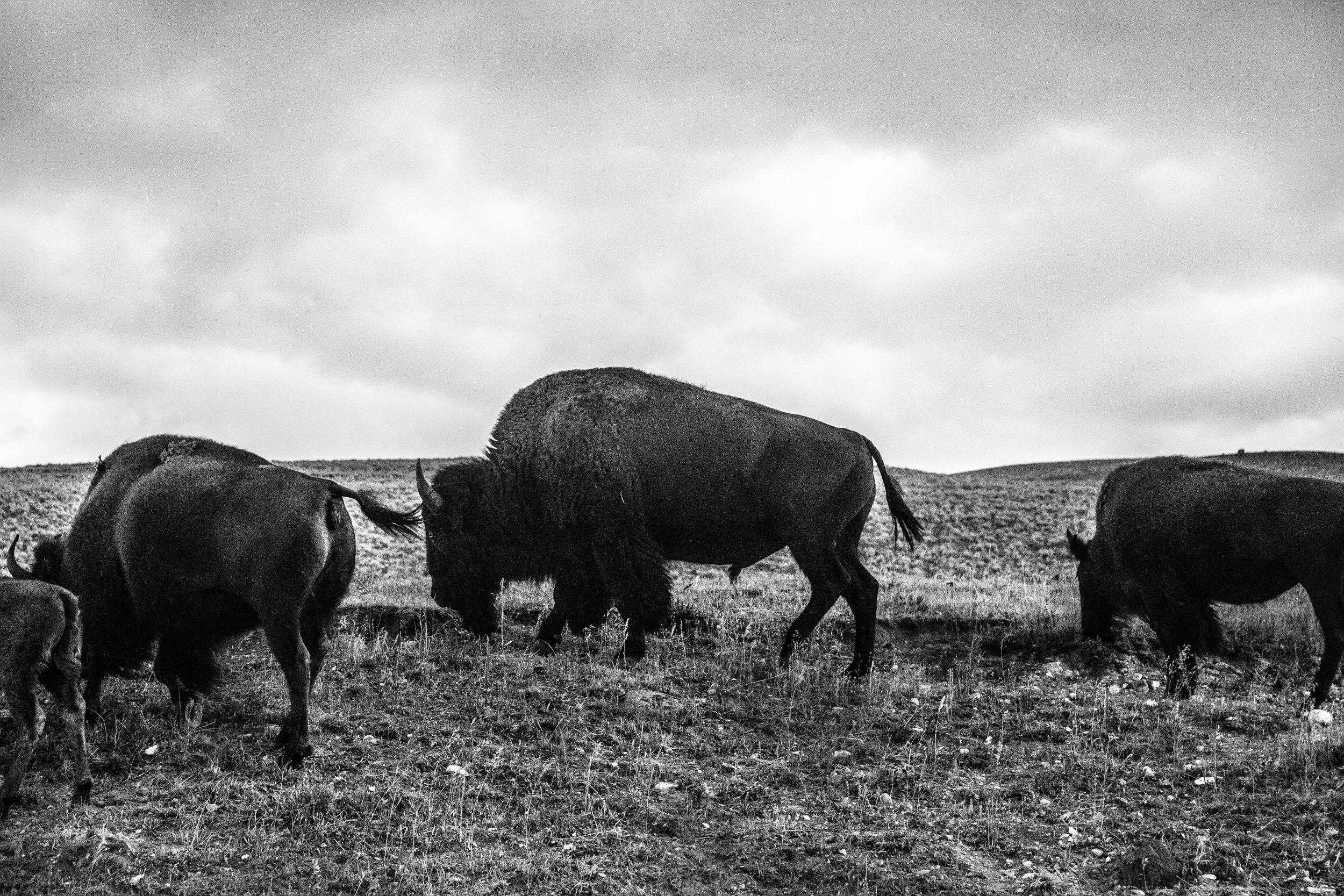 Yellowstone National Park, Wyoming  2016