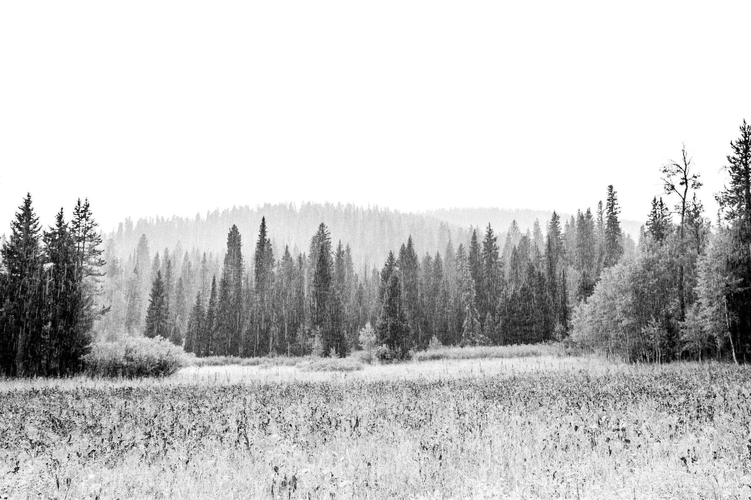 Wilson, Wyoming  2018