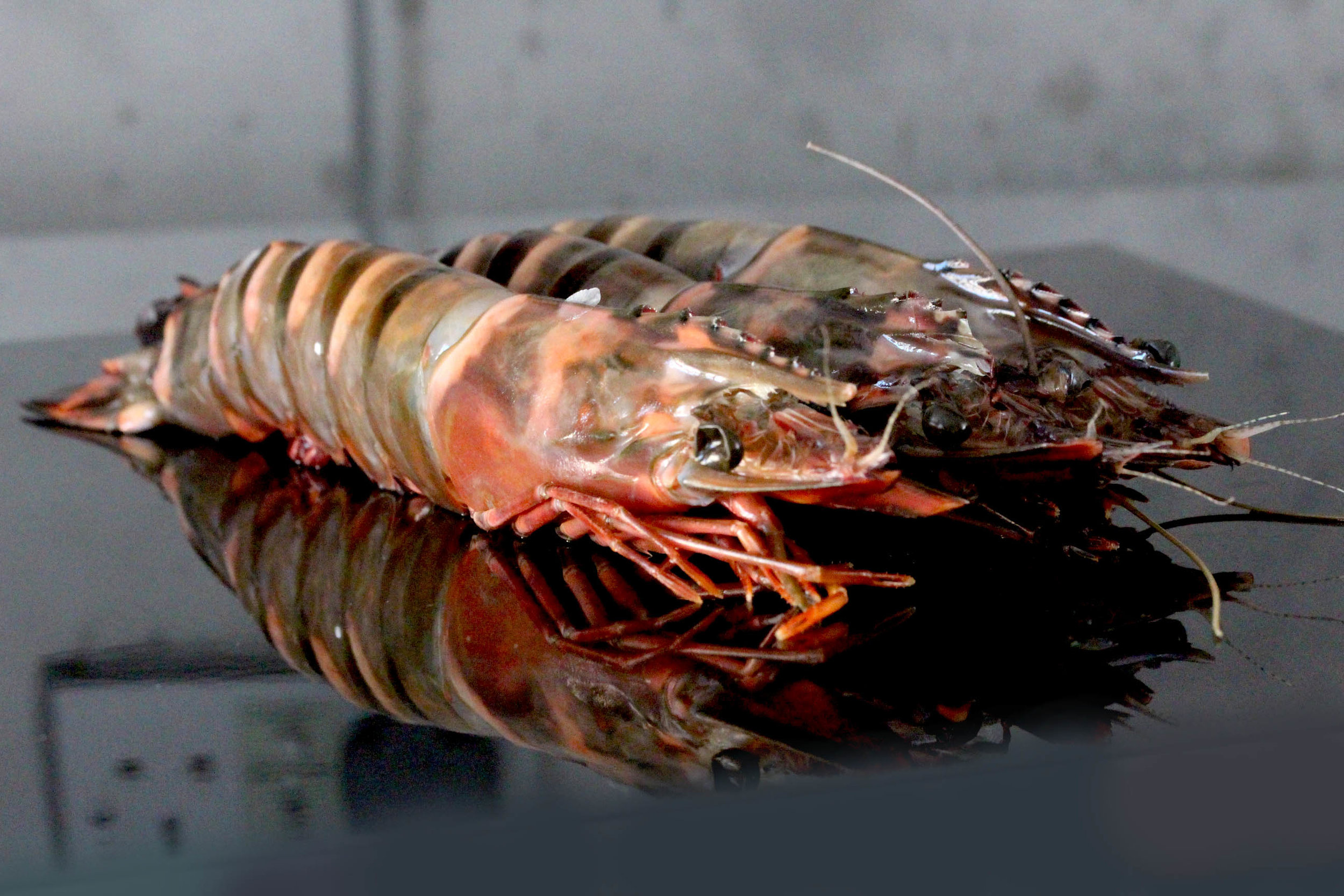 Fresh giant gambas prawns