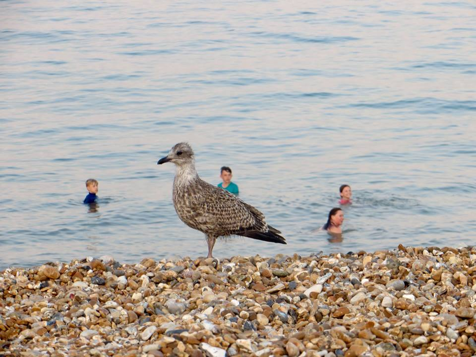 Seagulls and swimmers by Kathryn Reilly