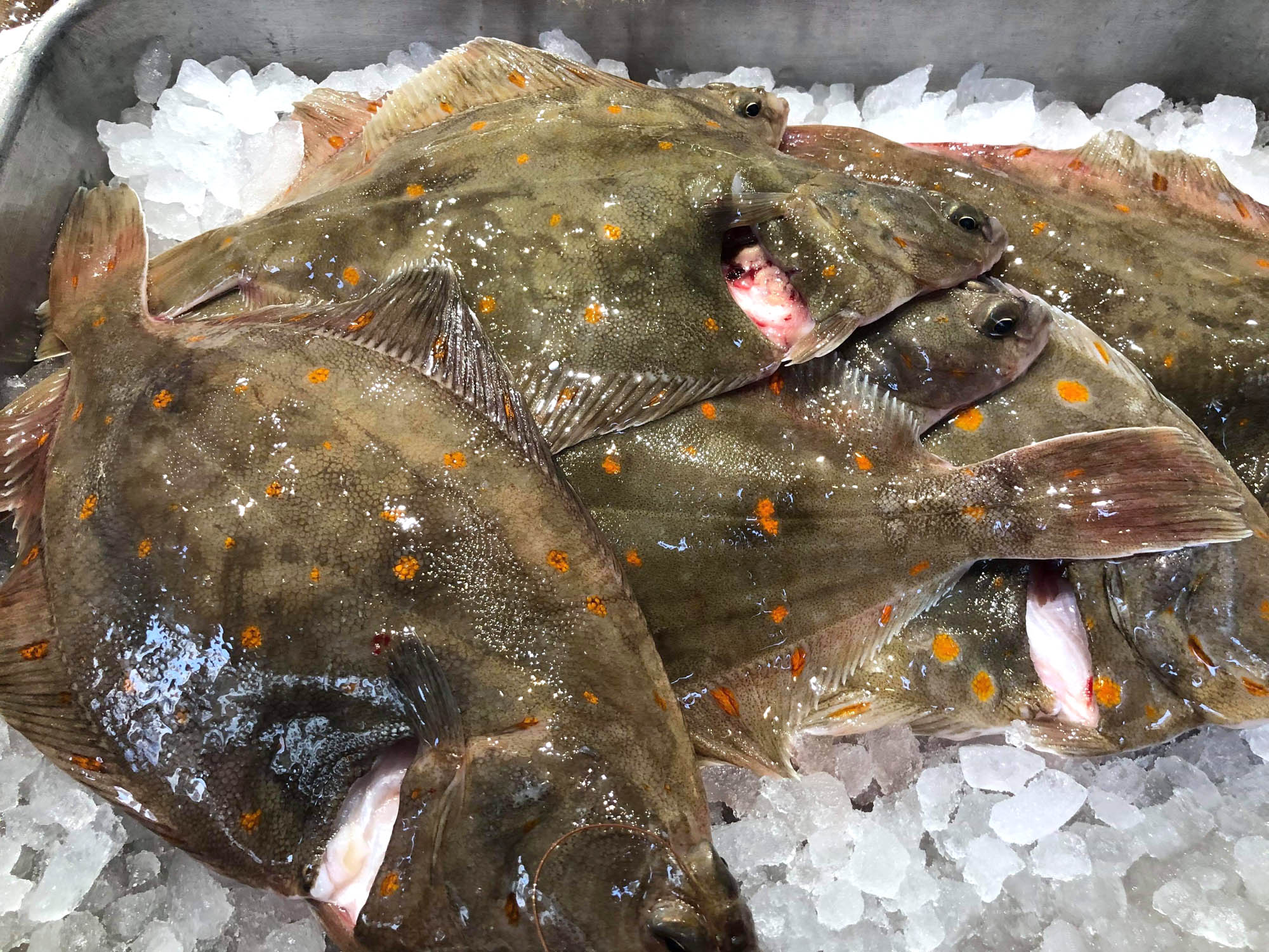 Local plaice: dust both sides with seasoned flour and pan fry it then eat. Simple and delicious