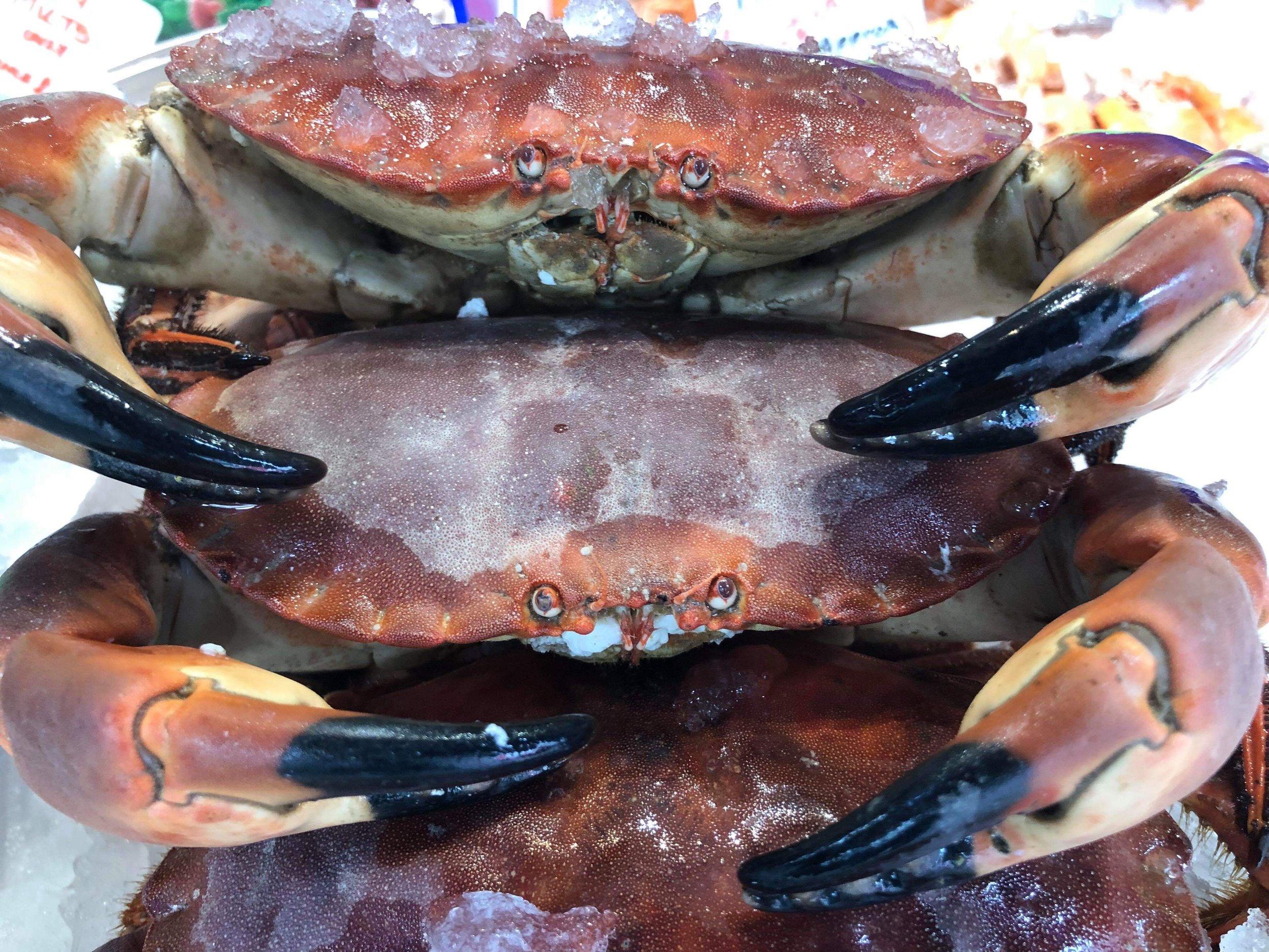 fresh-crab.JPG
