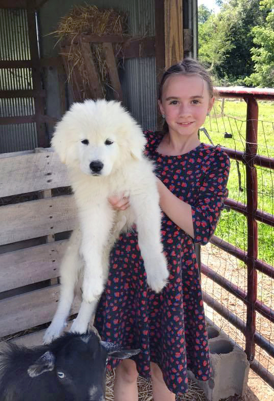 Hello KY Farm, Kentucky, Lorelei Sanders shows us a gimongous young pup.